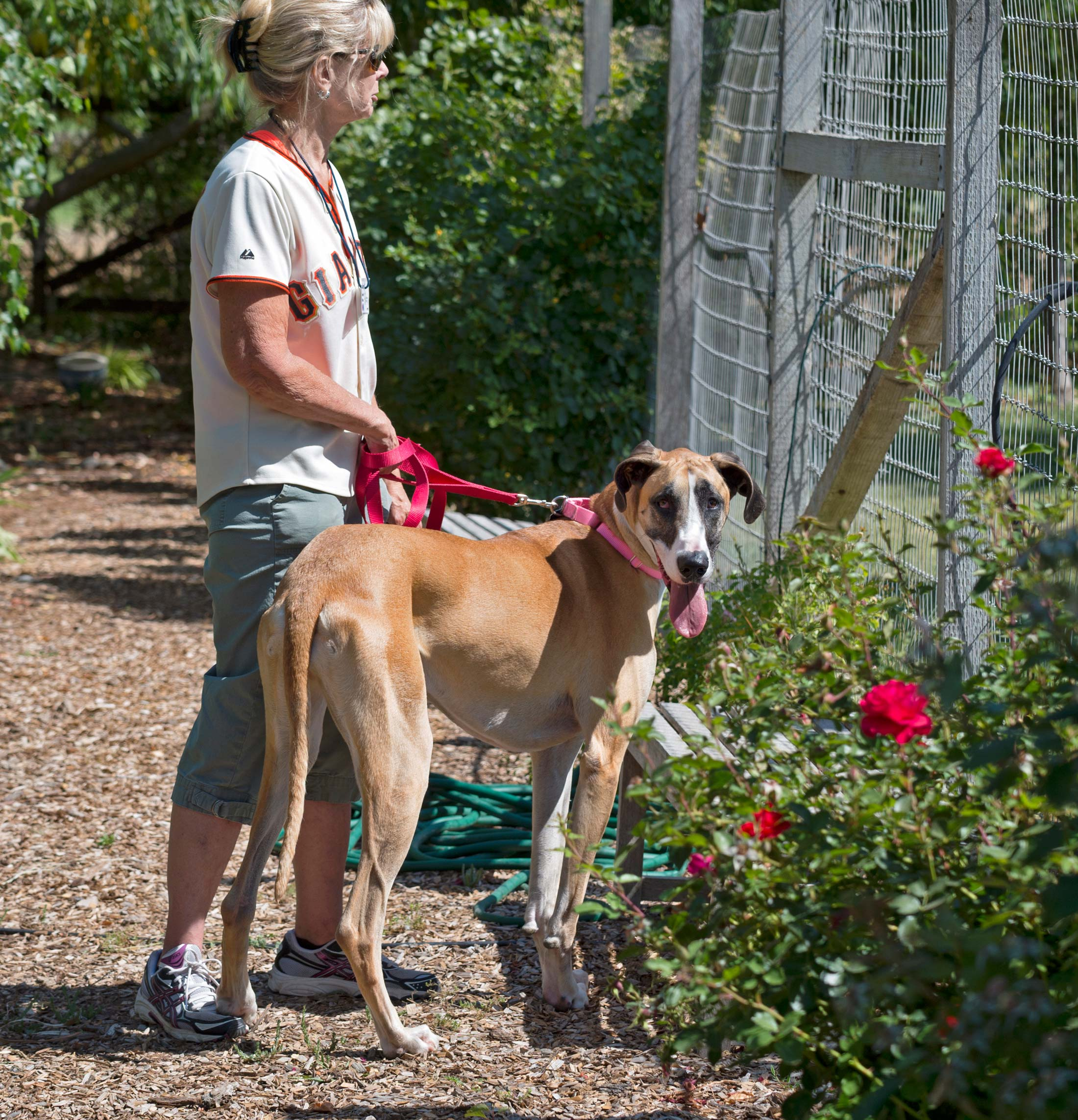 Rescue Dog Permits Qld