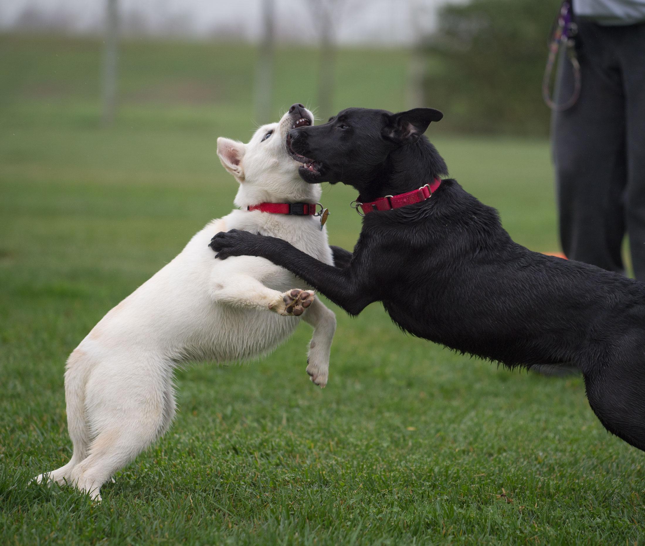 Image Result For Can Dog Meds