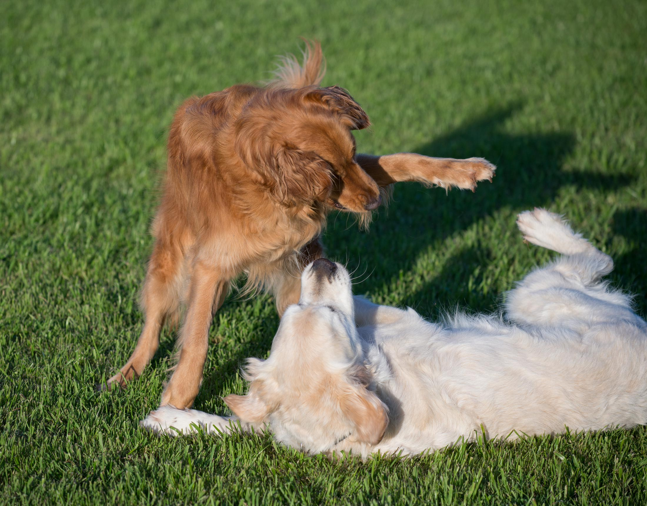 Image Result For Drugged Dog Can