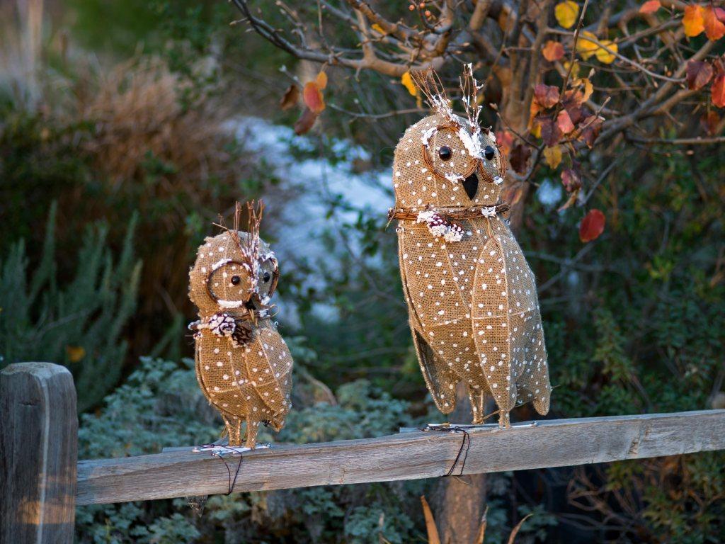 r-d_owls_810_7691_alt