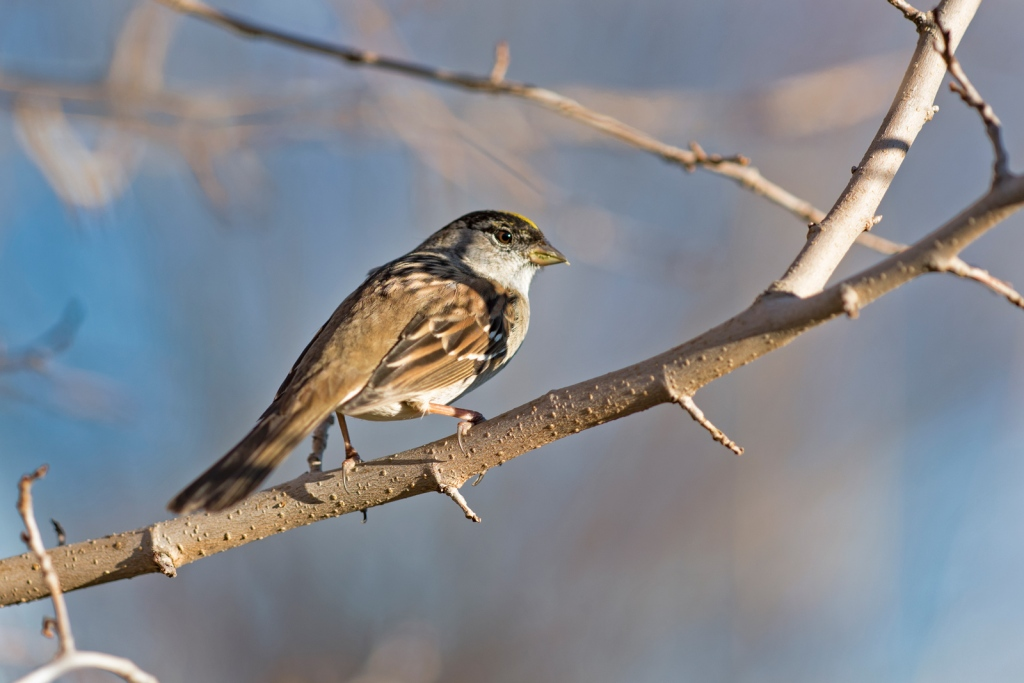 _r-d_bird_810_9442