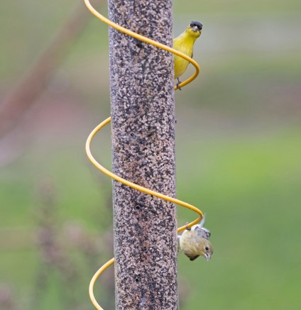 _r-d_finches_810_1440