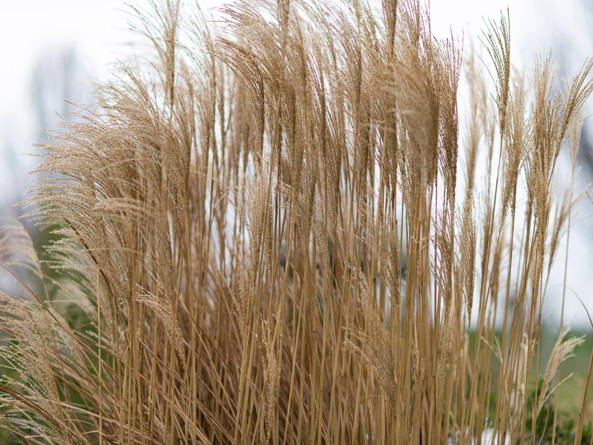 _r-d_grass_810_1679