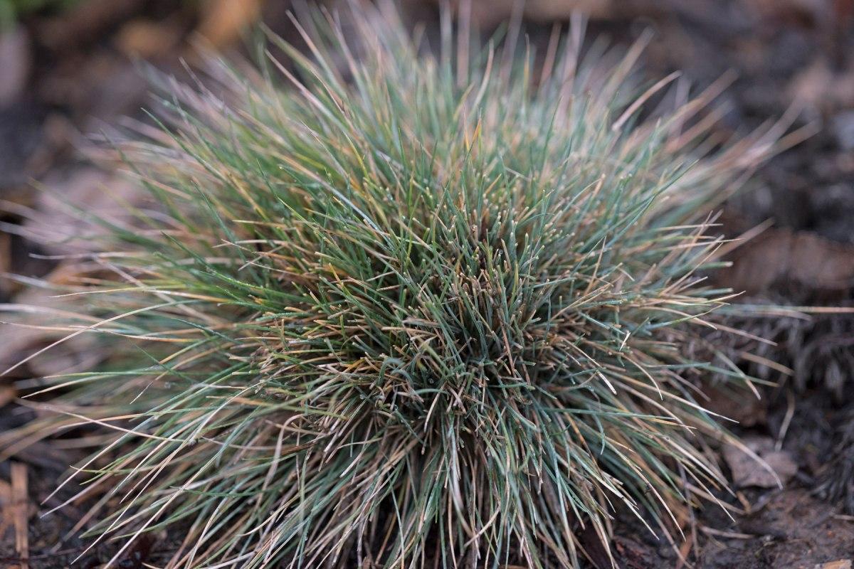 _r-d_porcupine-plant_810_1512