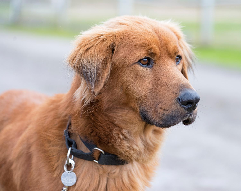 Home Dog Boarding Hereford