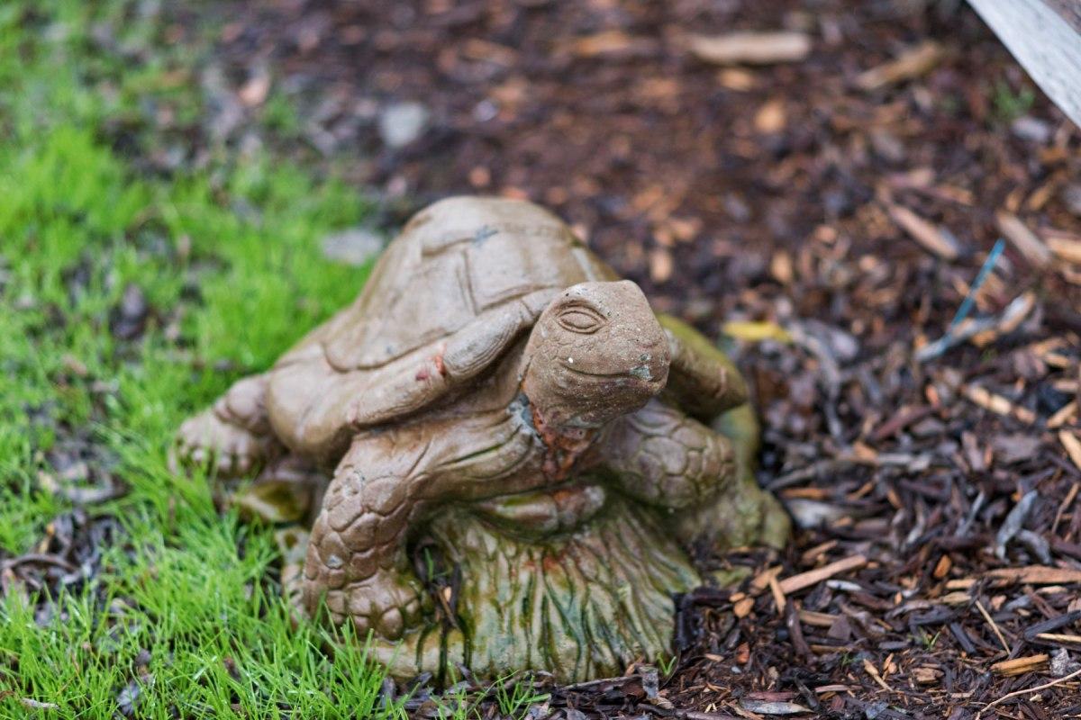 _r-d_turtle_810_1686