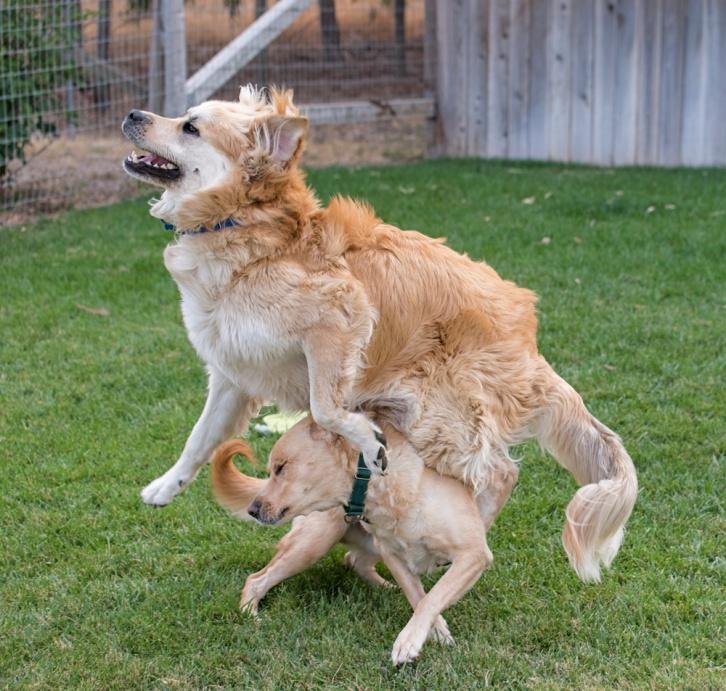 Yule hurdles Scrappy