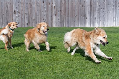Yule is an exceptional athlete so neither Bear nor scrappy can keep up with him.