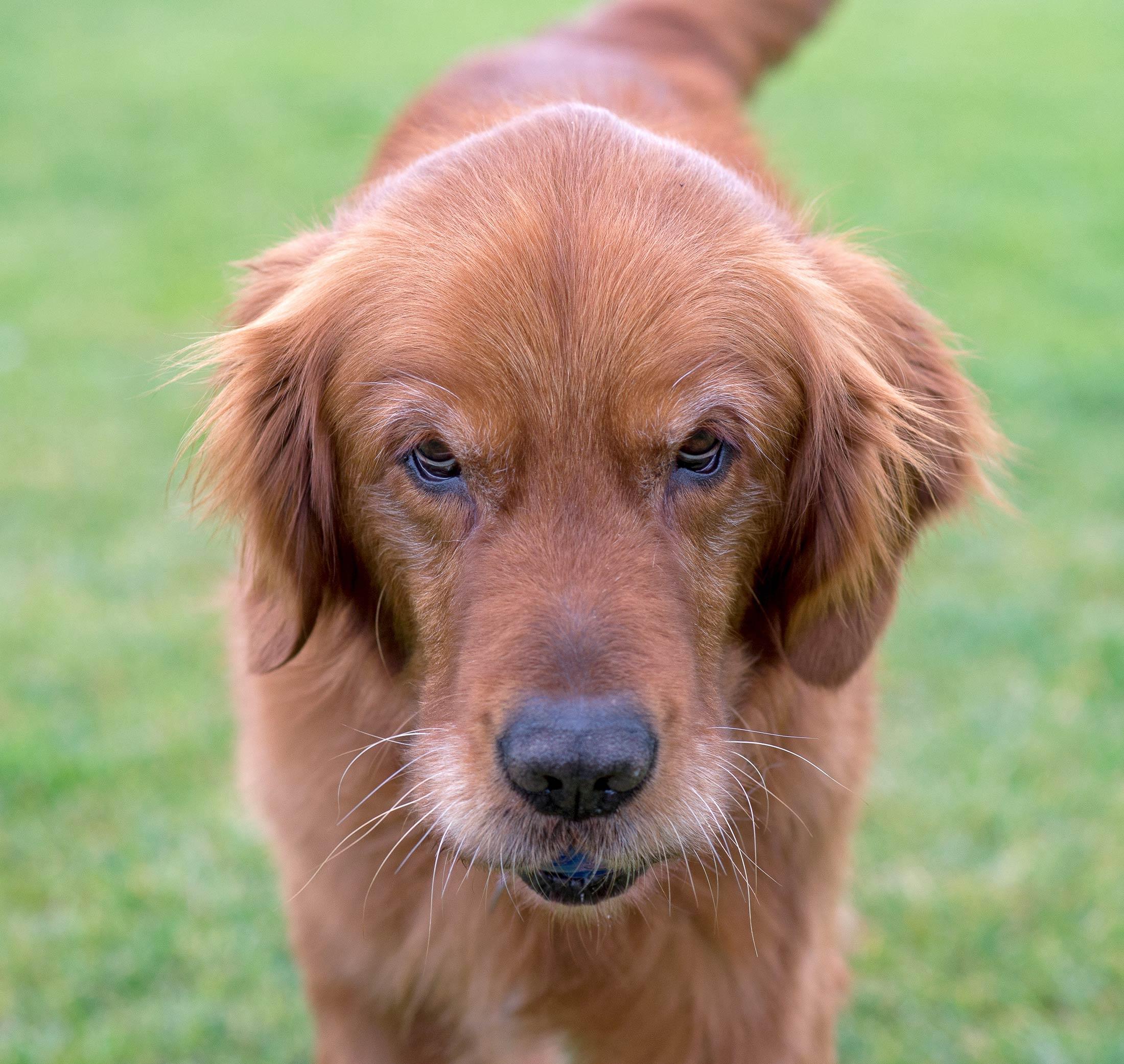 Shaggy Dog Rescue Hartland Wi