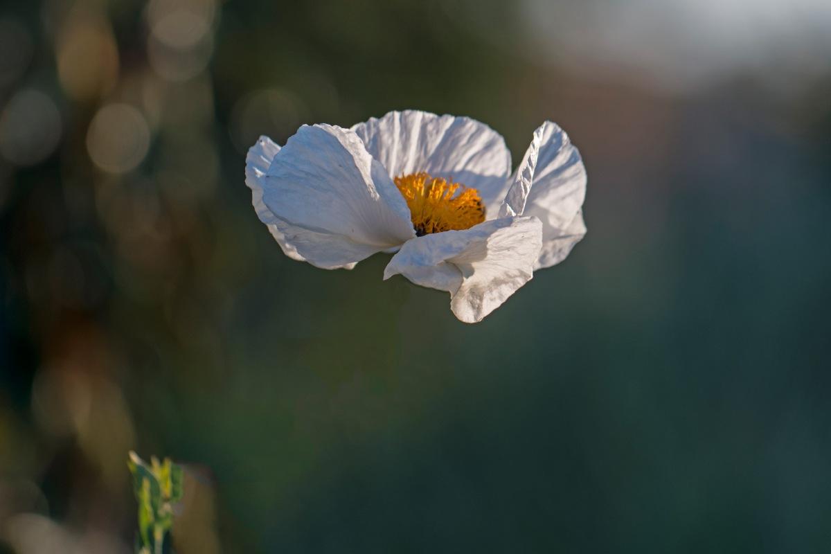 r-d_float-flower_500_2232