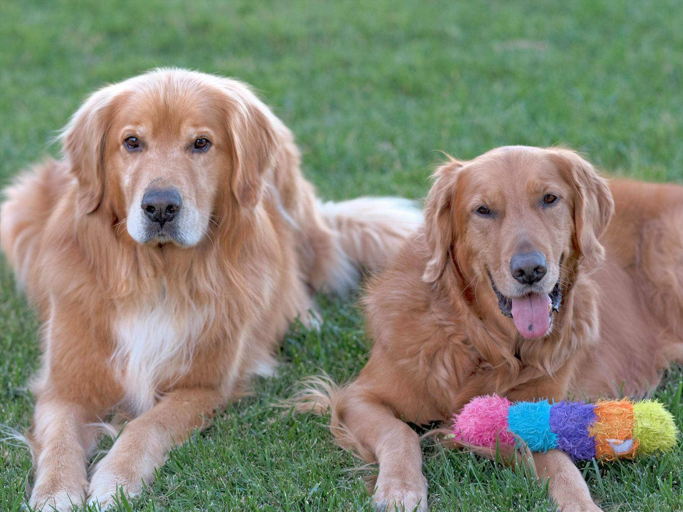 Less Sensitive Dog Breeds