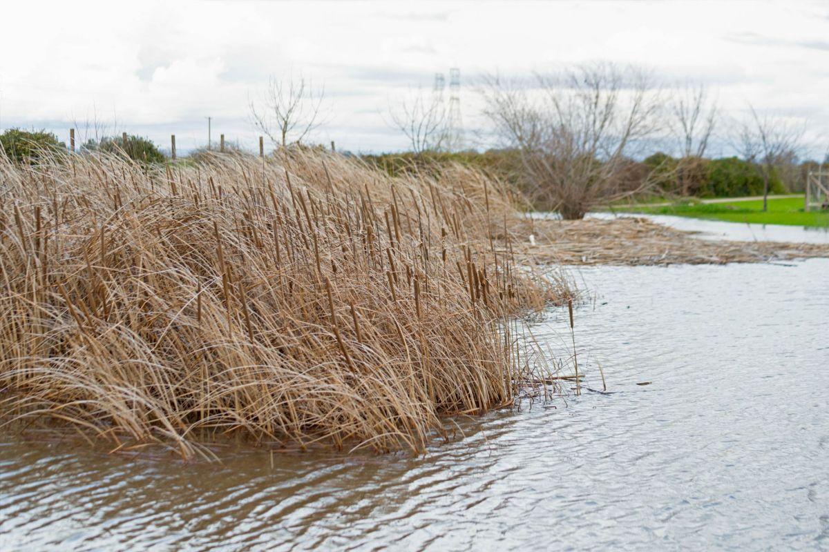 rd_8107931-pond_flood