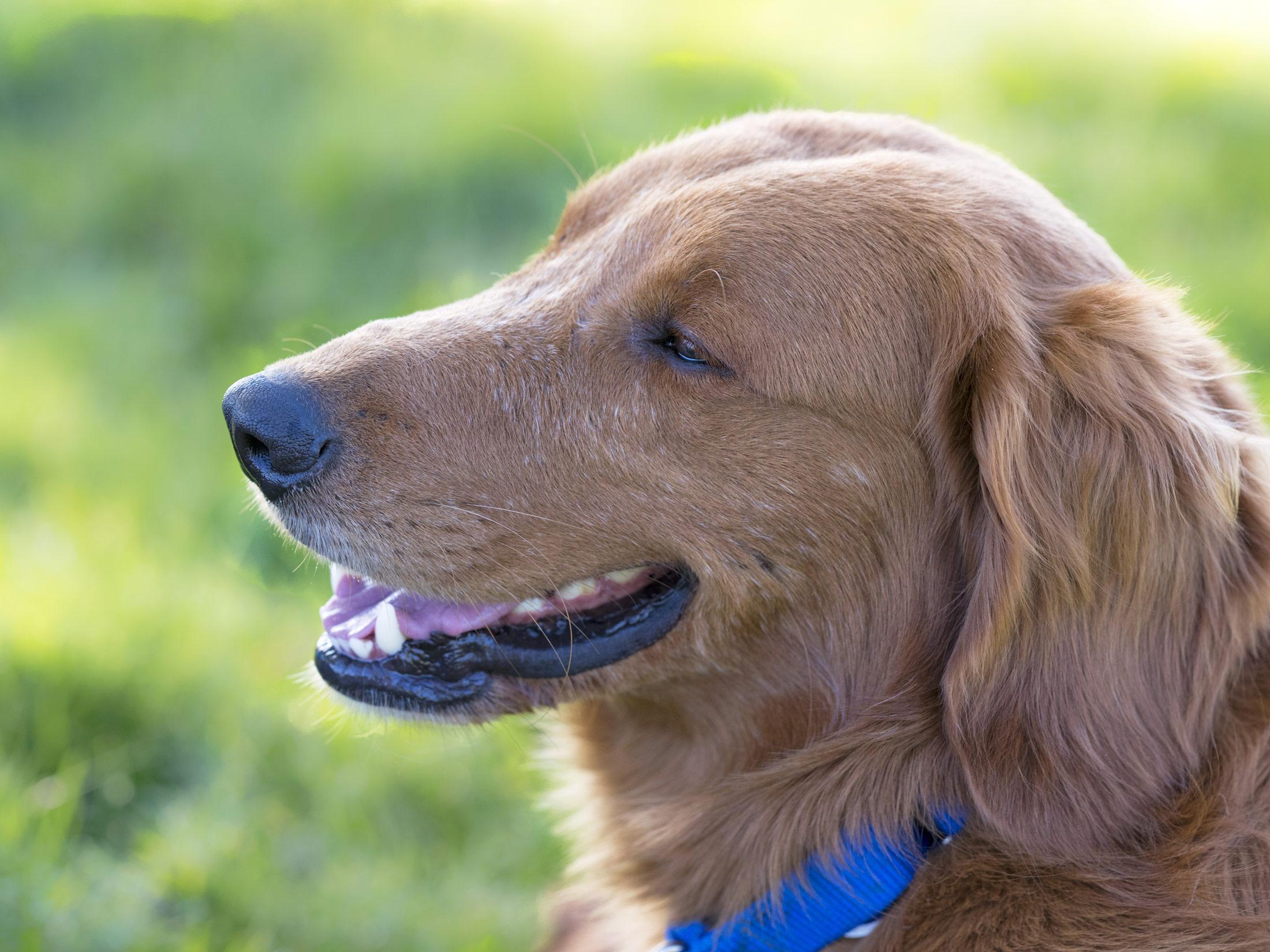How To Find A Good Dog Vet Reddit