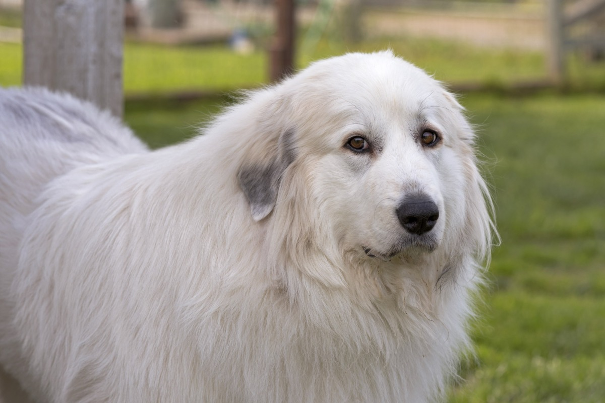 Image Result For Can Dog Losing
