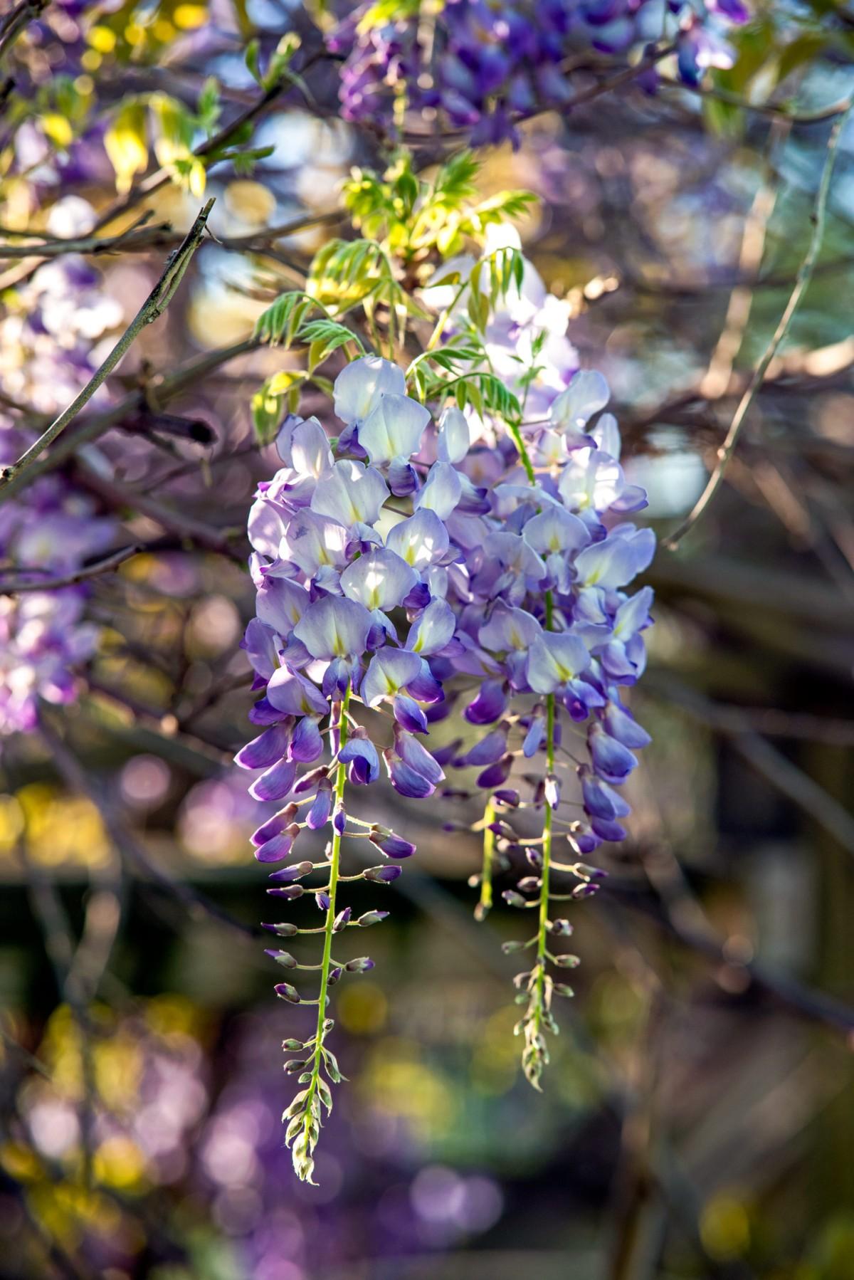 rd_flower_8105538